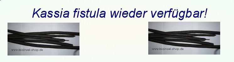 Kassia_fistula_wieder_verfuegbar!