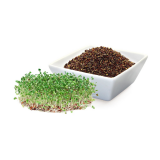 Bio Brokkoli-Keimlinge, Premium-Rohkostqualität