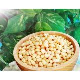 Bio Zedernüsse in Premium-Rohkostqualität