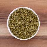 Bio-Mungbohnen in Premium-Rohkostqualität